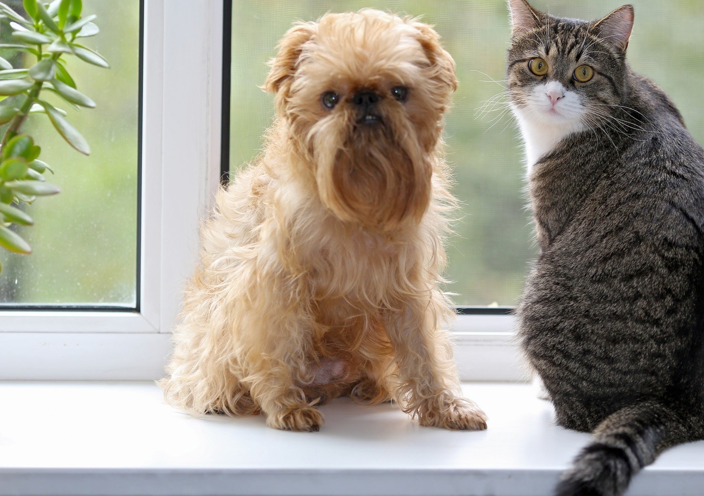 photodune-8728309-cat-and-dog-on-the-window-m-wide
