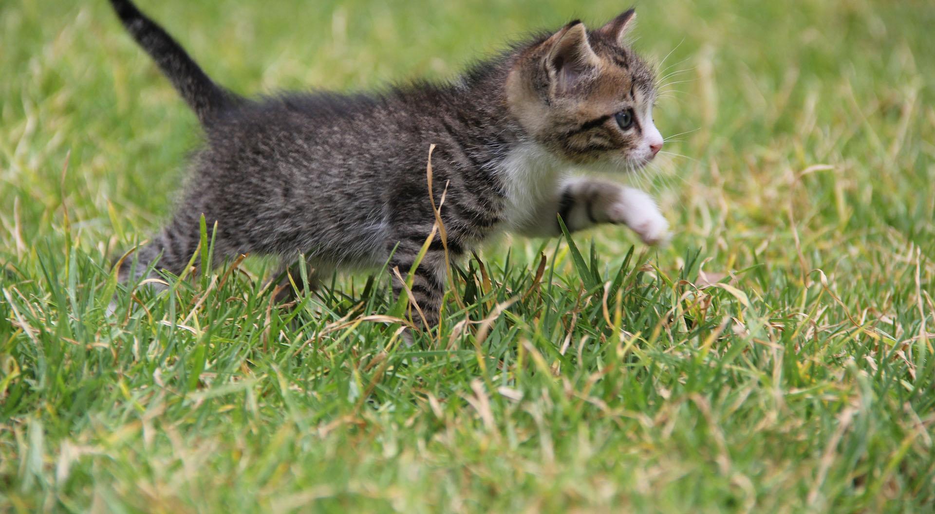 kitten-487641_1920