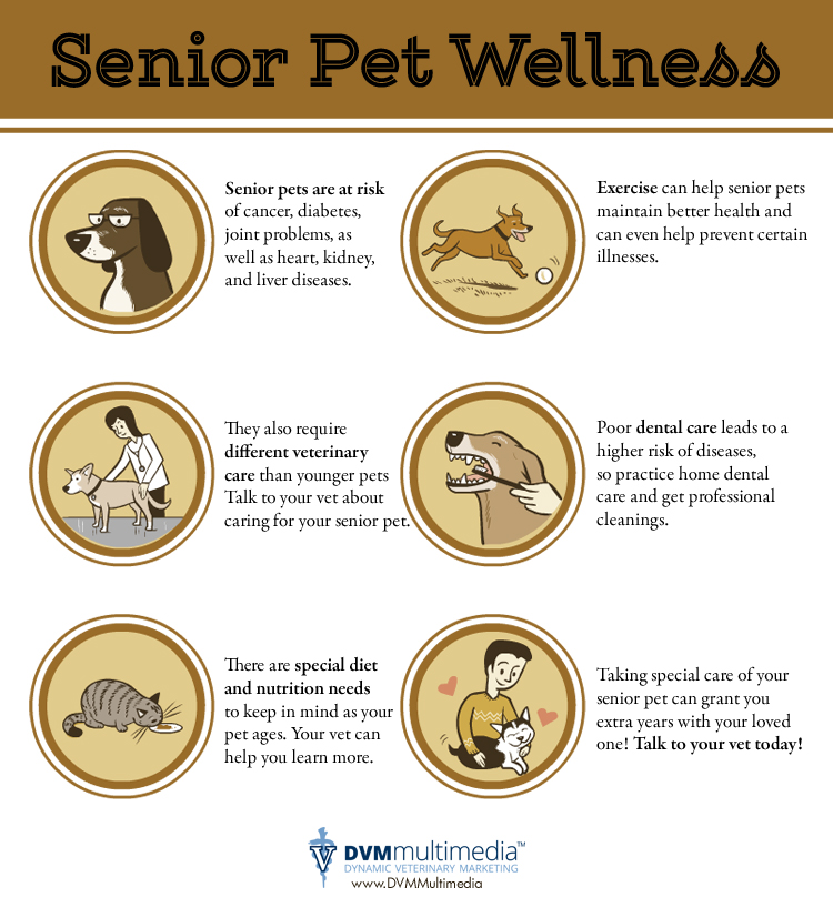 senior-pet-wellness